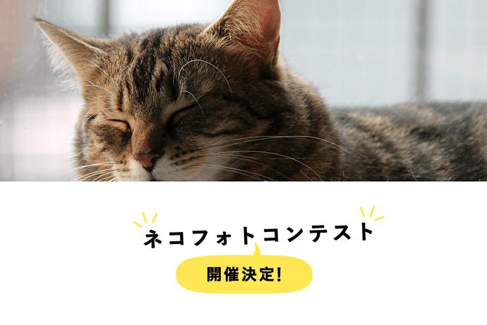 『ネコフォトコンテスト』参加作品募集中!